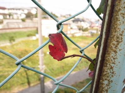 Nosutaruji_079